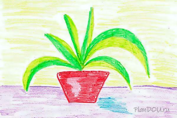 Тематическая неделя «Комнатные растения»